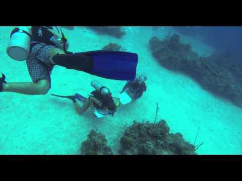 Marine Ecology Update