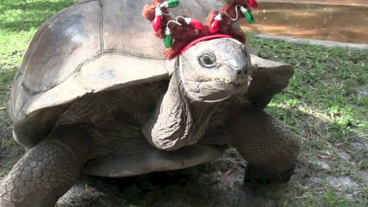 Image Result For Holiday Zoo