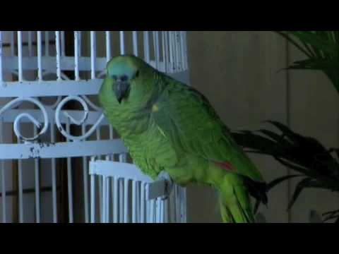 Funny Parrot - Used.ca Is Canada's And UK's Free Classified Ads Site