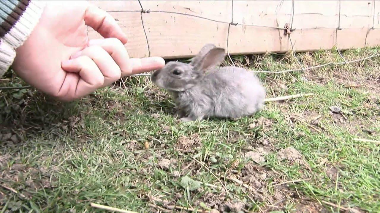 Gray Bunny