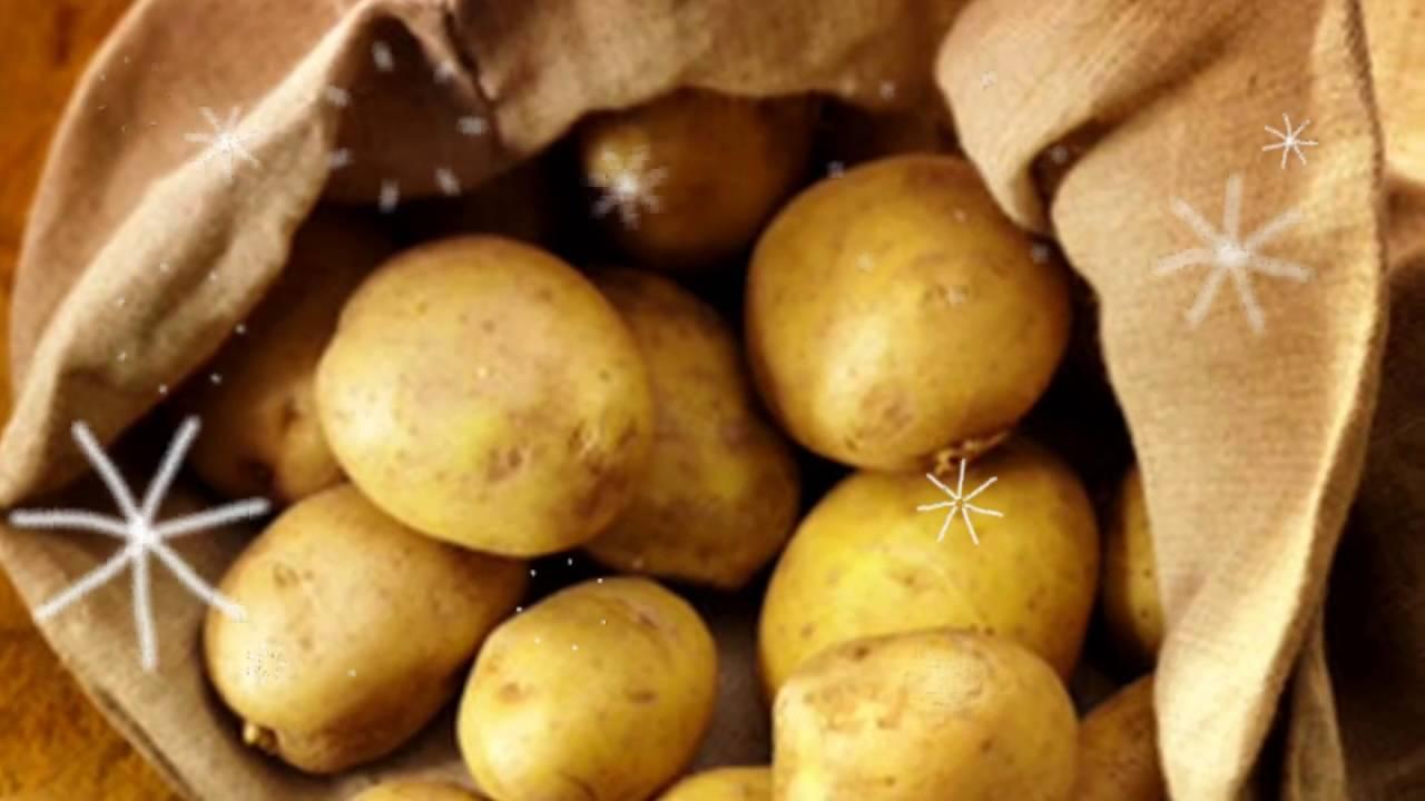 зеленый картофель опасен для здоровья