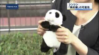 妊娠の兆候がみられるとして展示が中止されていた上野動物園の雌のジャ...