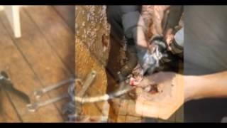 видео plomberie paris 2