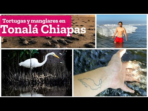 Centro ecoturistico El Madresal y Puerto Arista en Tonalá Chiapas | El Andariego