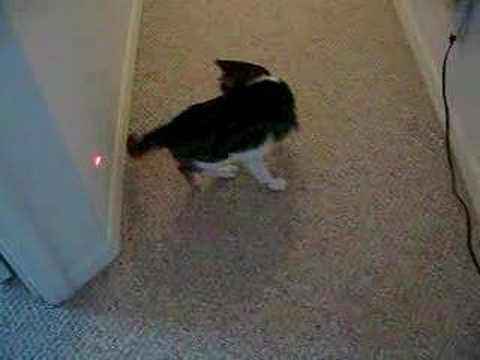 Gif Cat Chassing