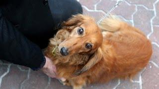 Хотите завести собаку в Британии? Учите законы (новости)