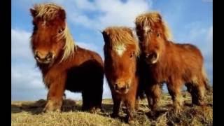 Самые красивые кони,лошади,лошадки, смешные пони