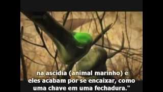 Pense sobre a legalização da Maconha 3 - Think about the legalization of Marijuana 3.