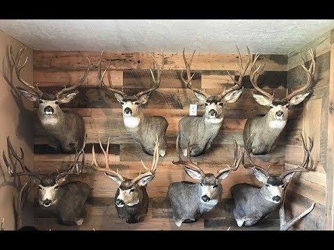 Eric Chesser and his barn wood wall!
