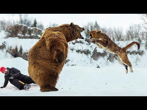 8 unglaubliche Momente, in denen wilde Tiere Menschen retteten!
