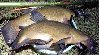Ведро крупного линя на вечерней зорьке Рыбалка на поплавок
