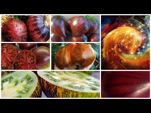 Фантастические сорта томатов