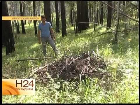 Что делать, если заблудились в лесу