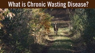 Chronic Wasting Disease questions answered thumbnail