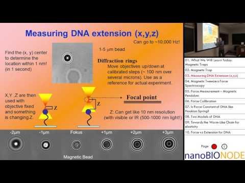 Biophysics 401 Lecture 13: Magnetic Tweezers III