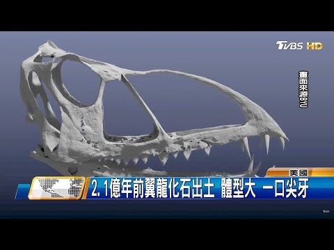 美發現新巨無霸翼龍化石 雙翼展開1.5公尺 全球進行式 20180818 (3/4)