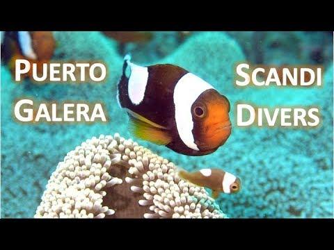 puerto-galera-x-scandi-divers-菲律賓-pg島-潛水-mar-2019