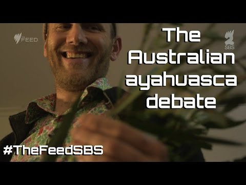 The Australian Ayahuasca Debate - The Feed