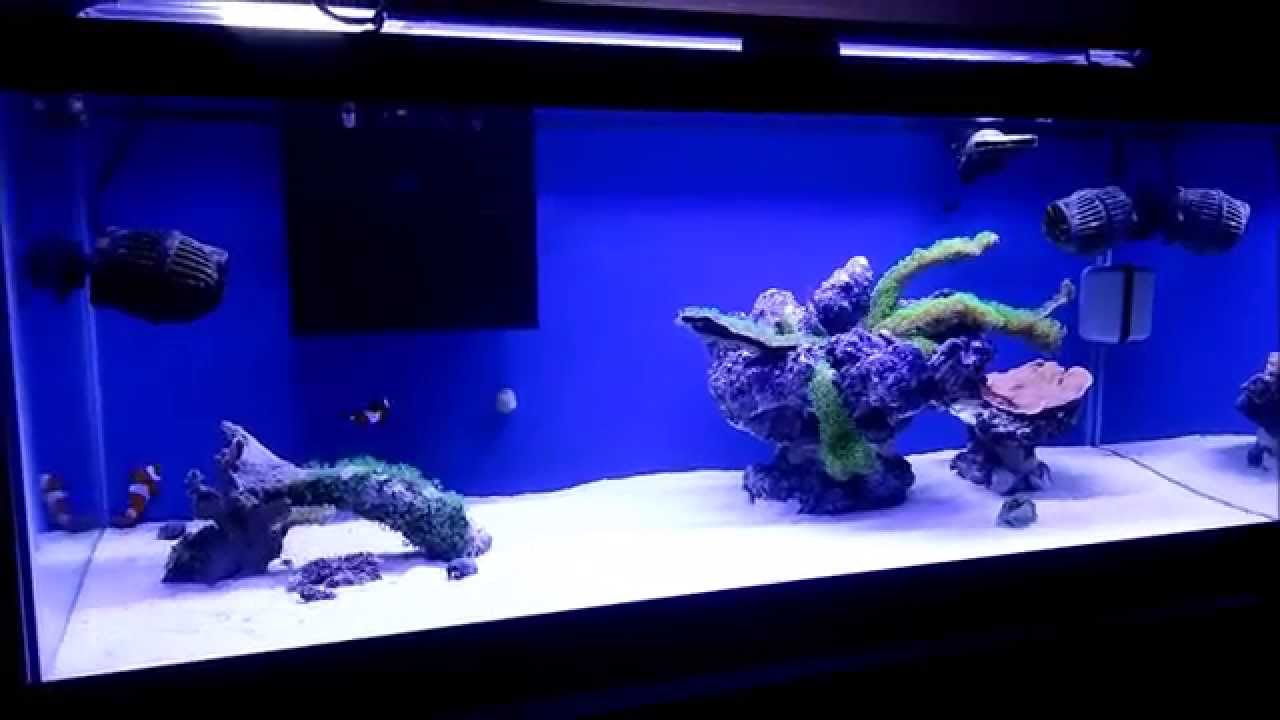 How to setup a 20 gallon nano reef tank morning on the for How to start a saltwater fish tank