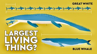 What\'s The Largest Thing To Ever Live On Earth?  DEBUNKED