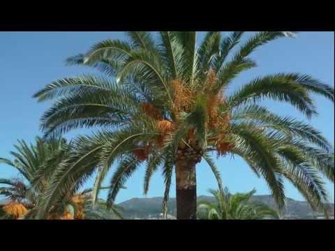 Mallorca Holiday