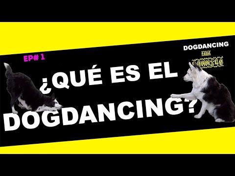 🙊DOGDANCING para DUMMIES EP# 1- ¿sabes qué es el DOGDANCING? 🙃😁