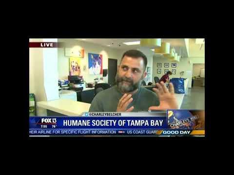 Post-Irma Coverage On FOX 13 Good Day
