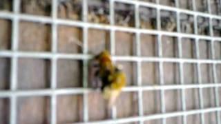 Bee orgasm.mp4
