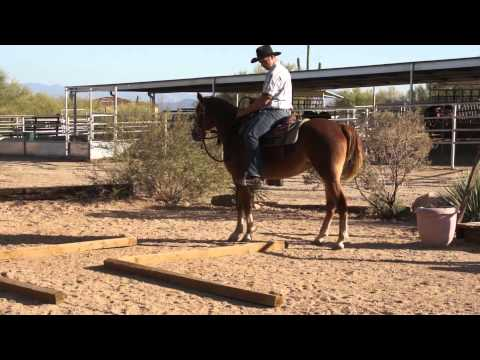 Just A Little Crazy- A Miller-Ranch Fox Trotting Mare