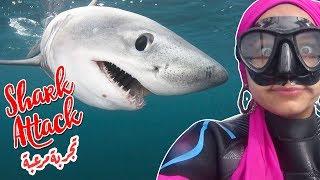 سبحت مع القروش في أفريقيا! | Swam with sharks in Africa