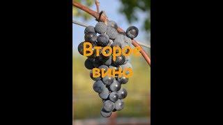 Второе вино из жмыха