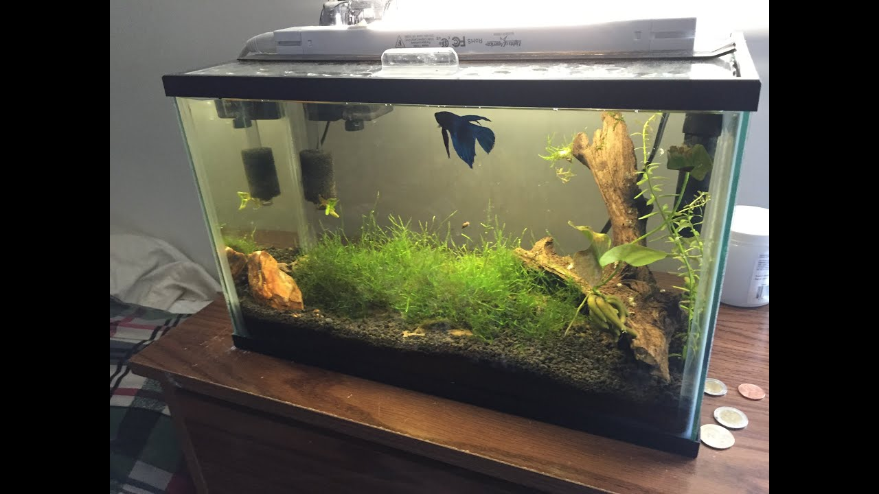 5 5 gallon planted betta tank youtube for Betta fish tank size