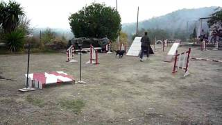 Wendy And Sabi Doing Agility At Coin Dog Training Club