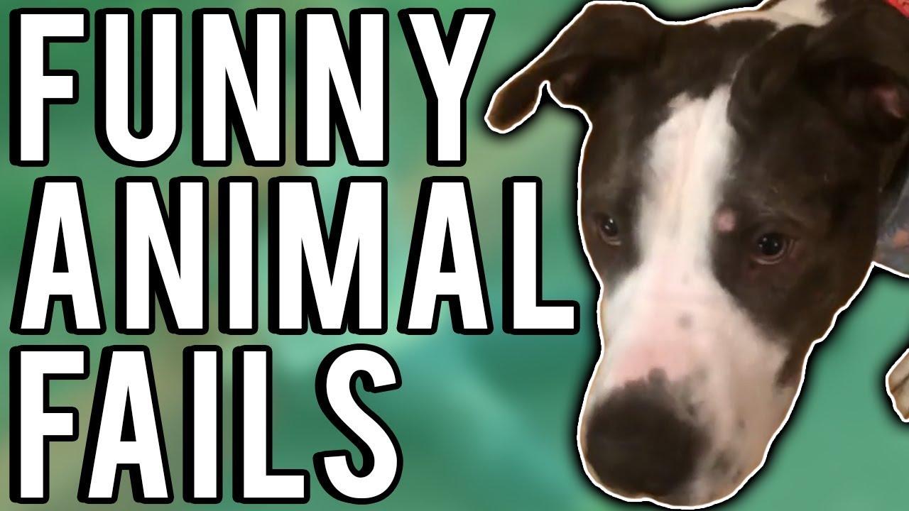 Humorous Animal Fails August 2017 | A Fail Compilation by FailUnited