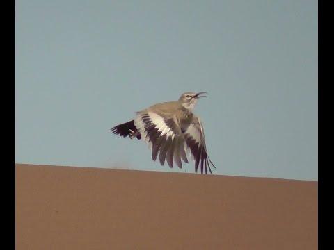 Fauna von Marokko & Atlant.Sahara (deutsch untertitelt)