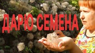 КЛЕМАТИС КАЛЕНДАРЬ - клематисы уход и выращивание в сентябре