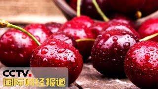 [国际财经报道]中美经贸摩擦:美国车厘子成熟 种植户担心滞销| CCTV财经