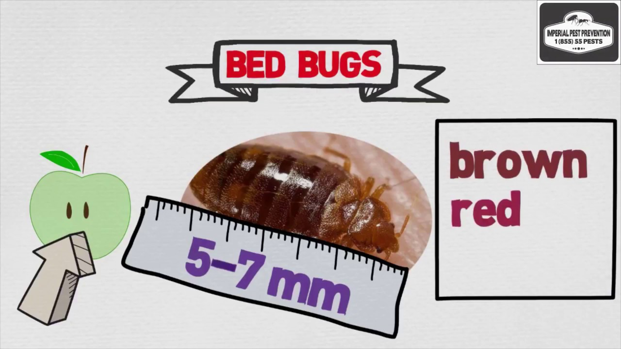 How Much is a Bed Bug Pest Exterminator Service?