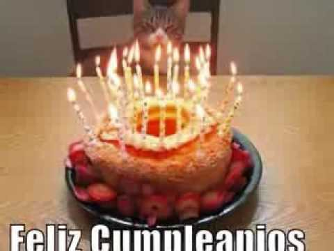 cumpleaños gatos Travel Video
