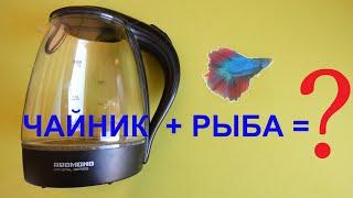 Подарок сделанный своими руками или аквариум из чайника!