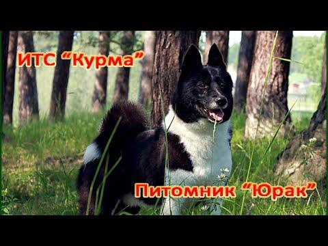 "Питомник ""Юрак"" и ИТС ""Курма"""