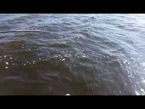 видео: Щука на спиннинг 15 кг. Река Кама Набережные Челны