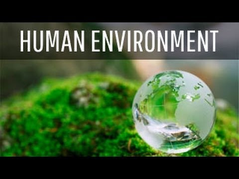 humans and the environment Ddt remained in the environment and was absorbed into the food chains this lead to bioaccumulation and the concentrations of ddt in the organisms increased as the trophic levels increased this was lethal and caused a lot of damage to organisms that it was not supposed to kill.