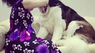 Stbernard Mimo getting love from her granny