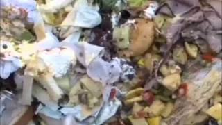 Overconsumption & Food Waste In America