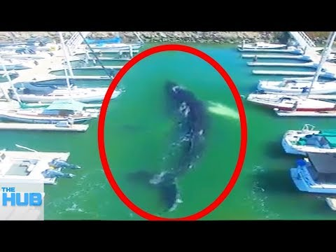 Download Youtube: 10 Sea Creatures That Wound Up In The Strangest Places
