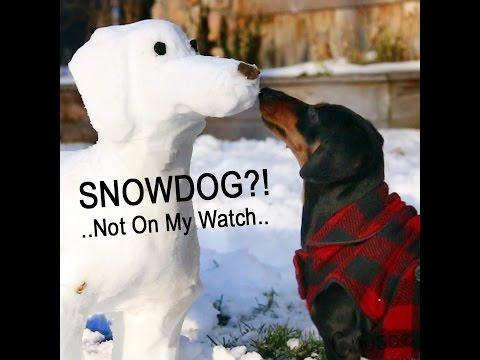 Crusoe Destroys the SnowDog in His Yard!