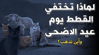لماذا تختفي القطط تماما يوم عيد الاضحى ؟ واين تذهب..؟! إجابة ستدهشك ..!