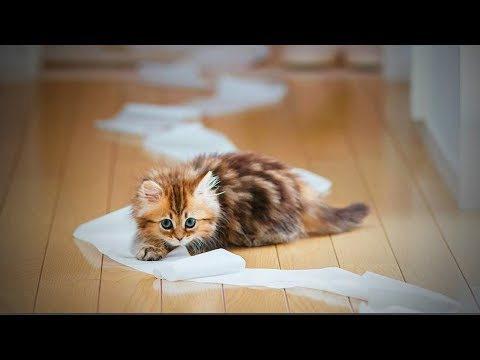 Funny Pets 🐶🐱 Funny and Cute Baby Animals (Part 2) [Funny Pets]