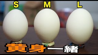 卵S.M.L黄身の質量一緒!! ホンマか検証 PDS